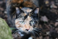 Cat in Selective Focus Photography during Daytime