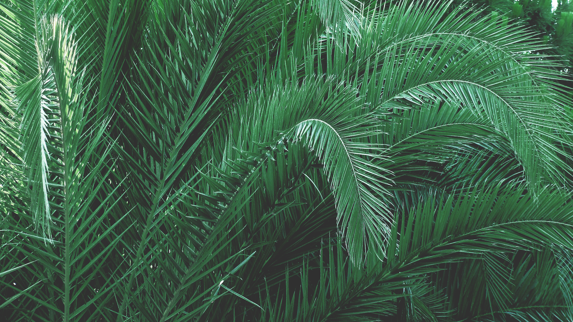 Green Plants · Free Stock Photo