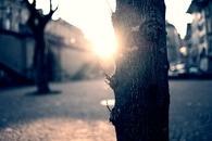 sunny, sun, trees