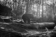 black-and-white, animal, zoo