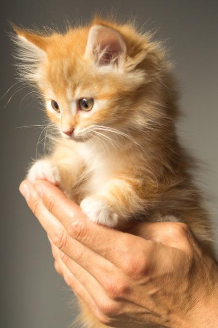 Spiksplinternieuw Gek op katten | Wie is er niet groot mee geworden MI-82