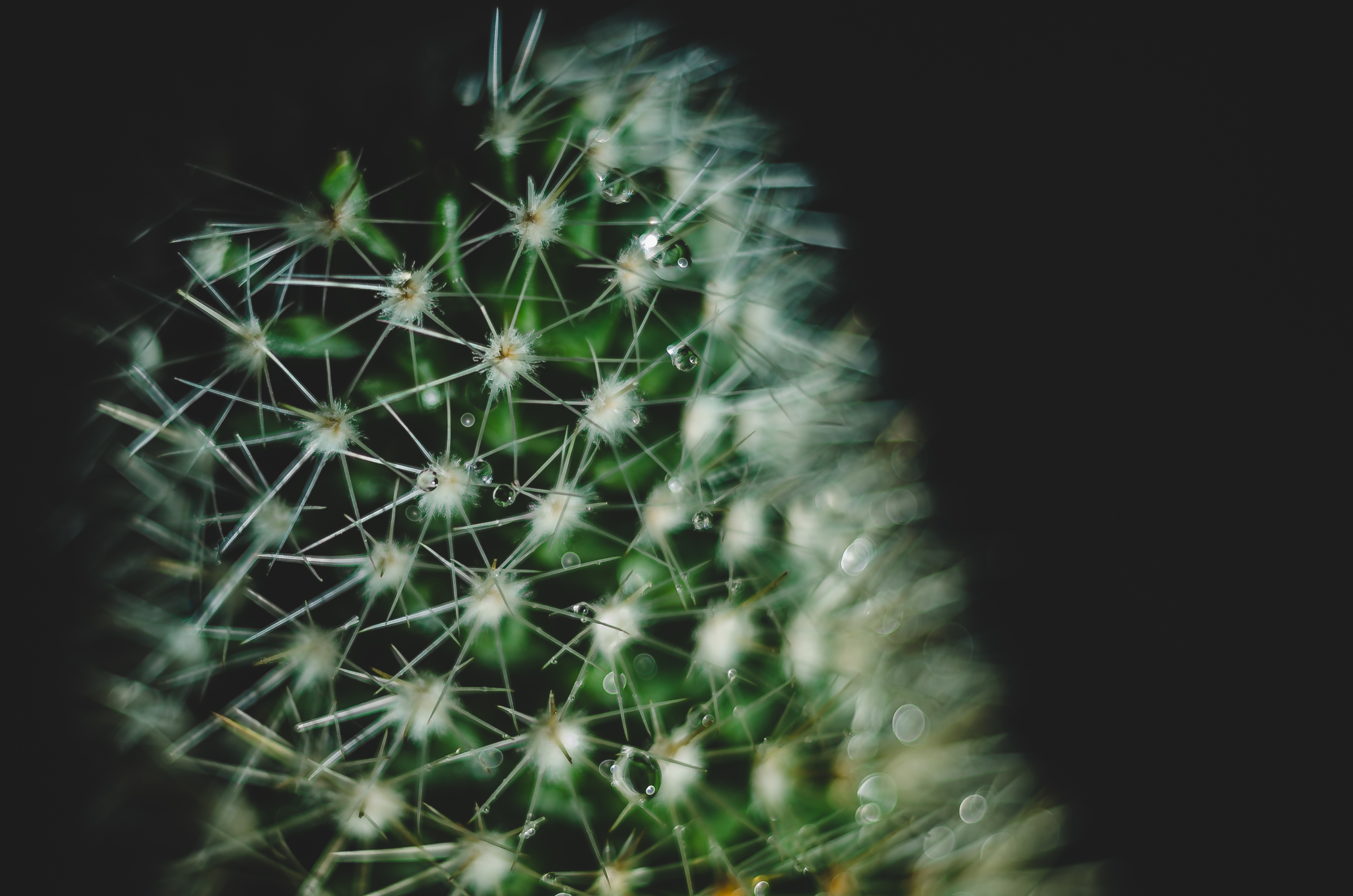 Iso Definition Photography >> Free stock photo of cactus, drop of water