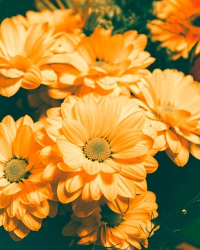Free stock photo of flowers, plant, close-up view, orange