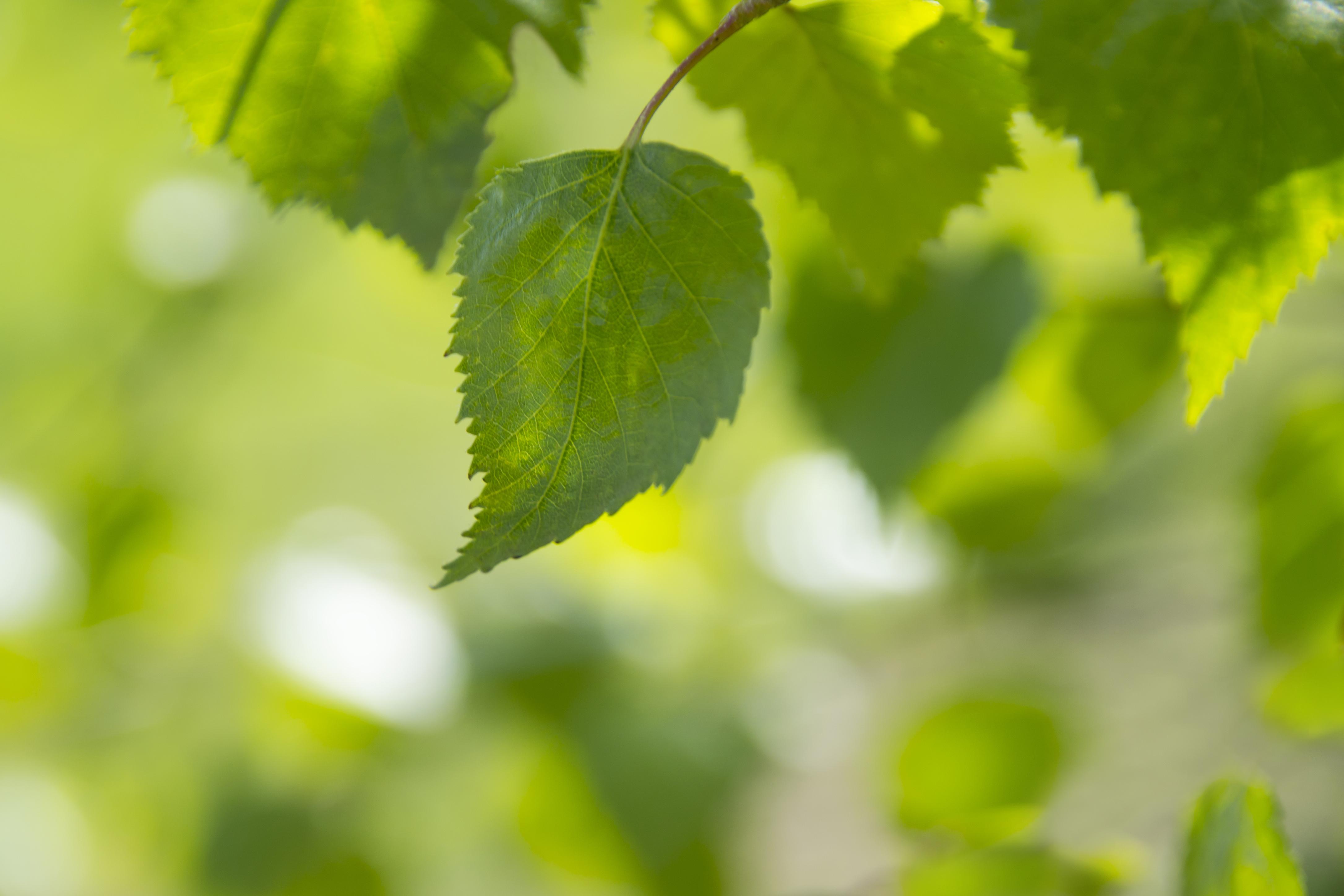 Https Static Pexels Com Photos  Leaf Nature Green Spring  Jpeg