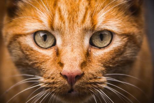 Free stock photo of animal, pet, cat
