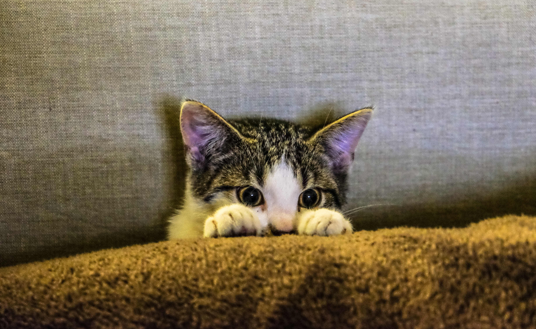 free stock photos of pet pexels
