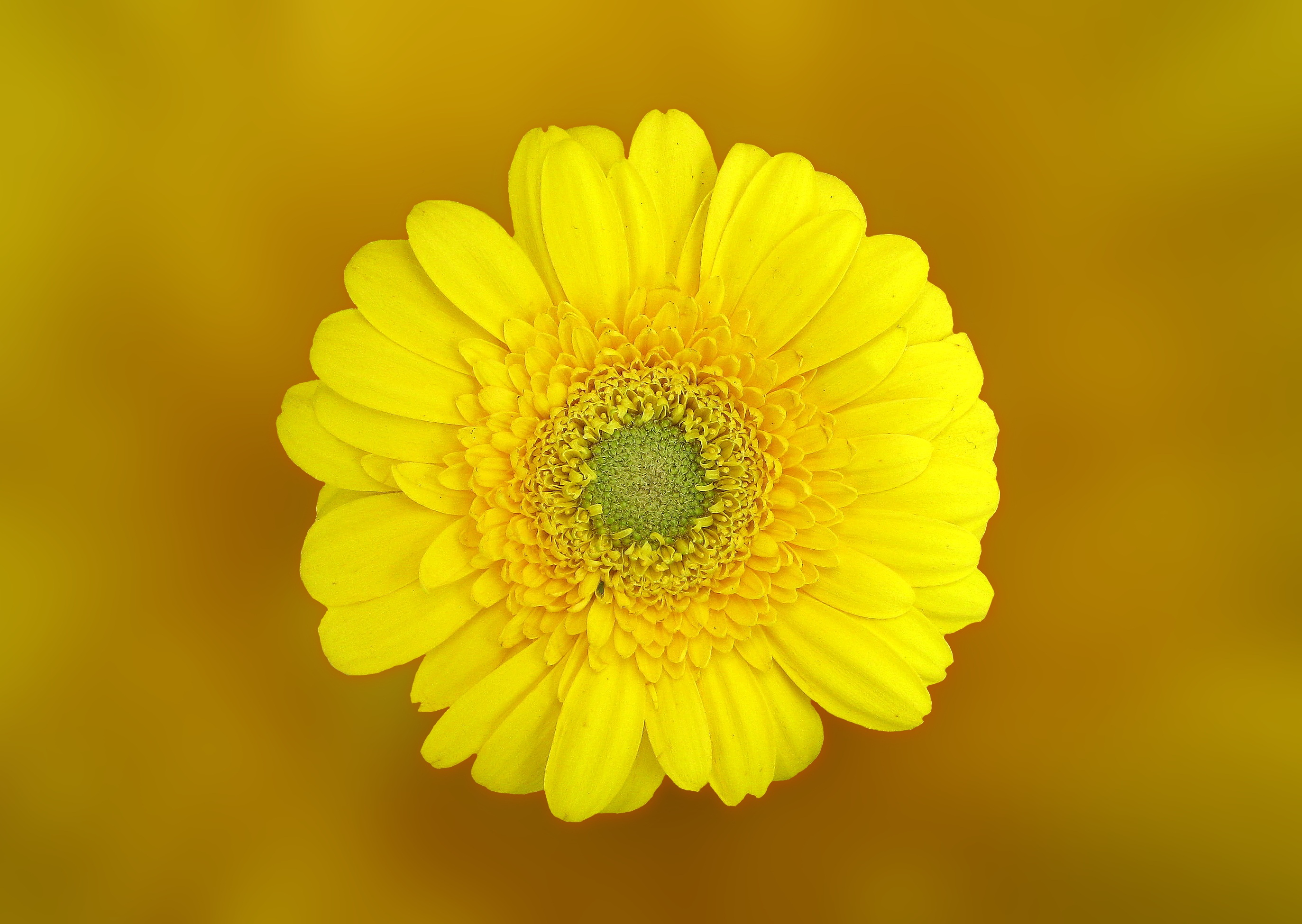 Image of a yellow flower