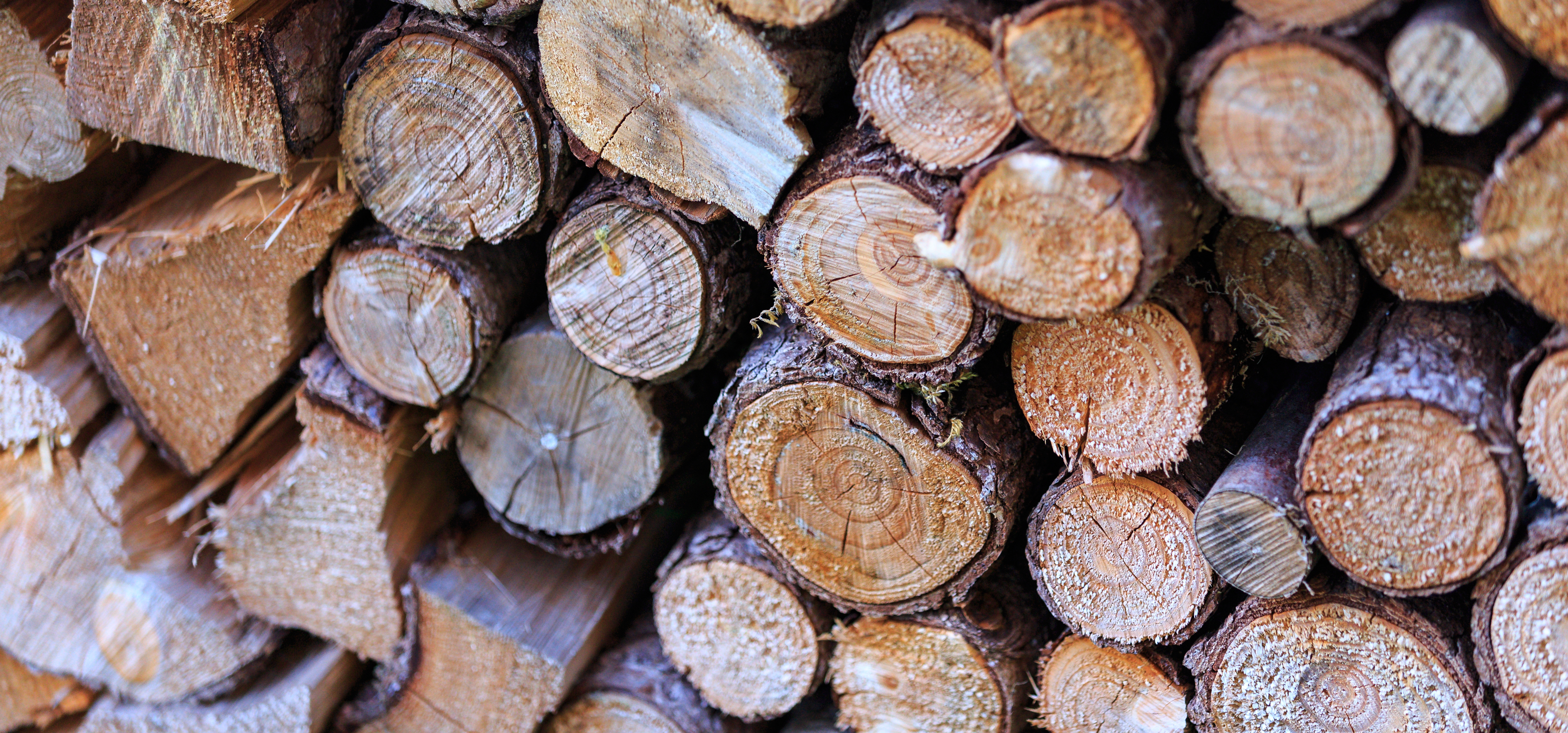 Free stock photo of logs tree wood for Tree log