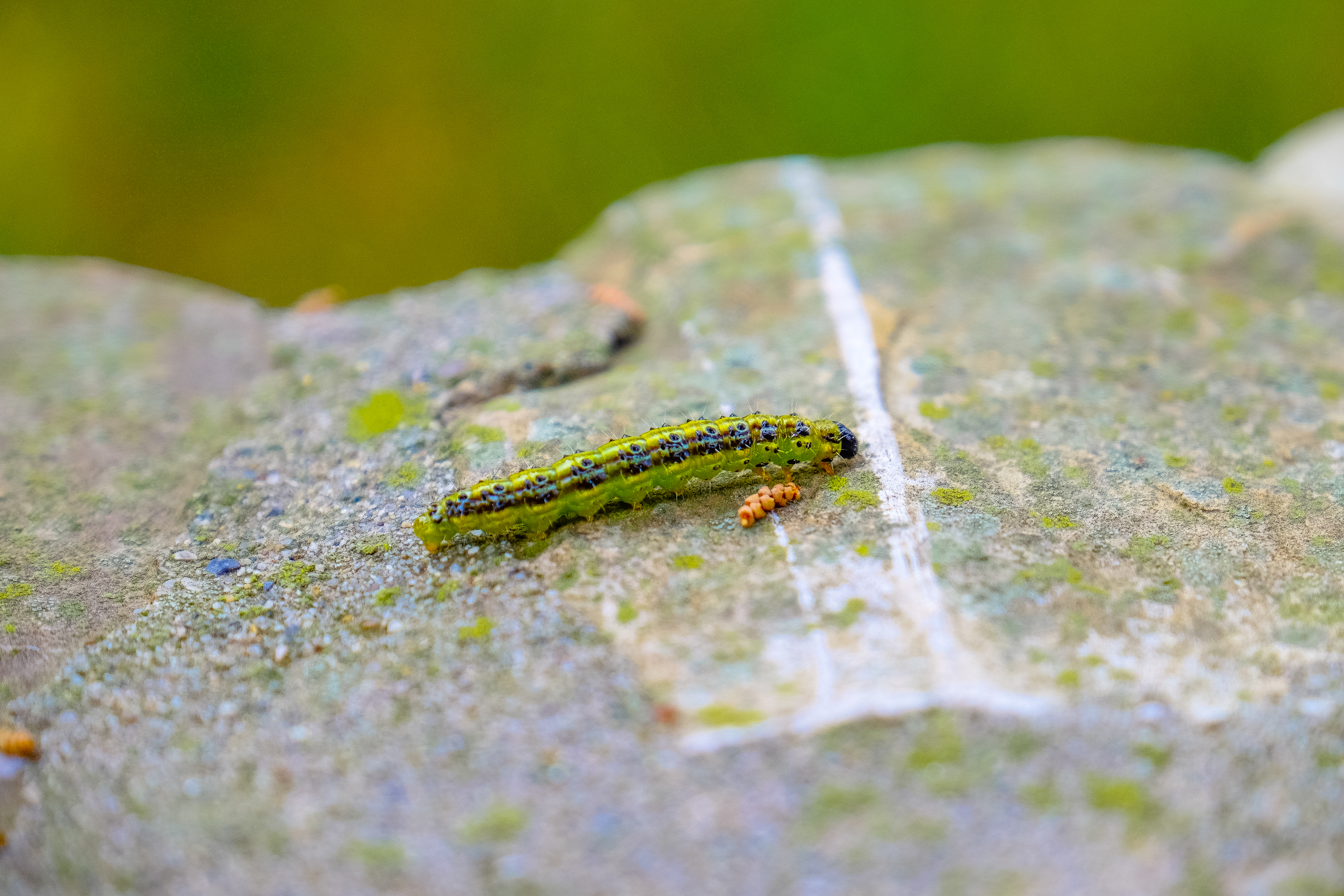 free stock photo of animal caterpillar insect