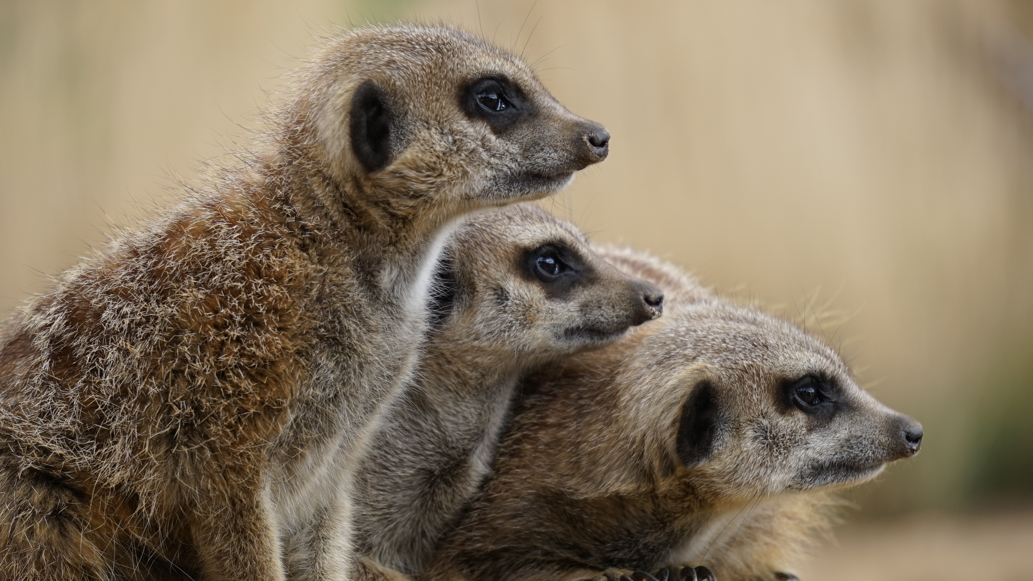 Pictures Of Mammals 117