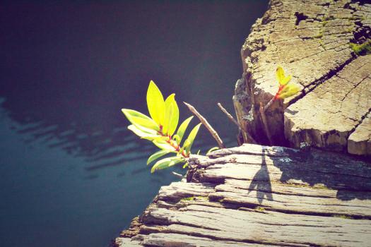 Bole, Lake, Moss, Nature