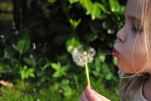 Blowing, Child, Dandelion, Flower