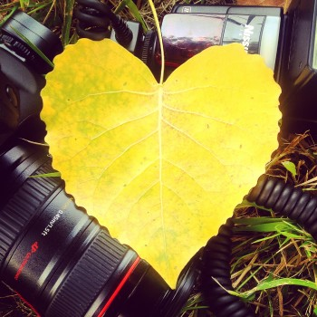 Canon, Flash, Foliage, Heart