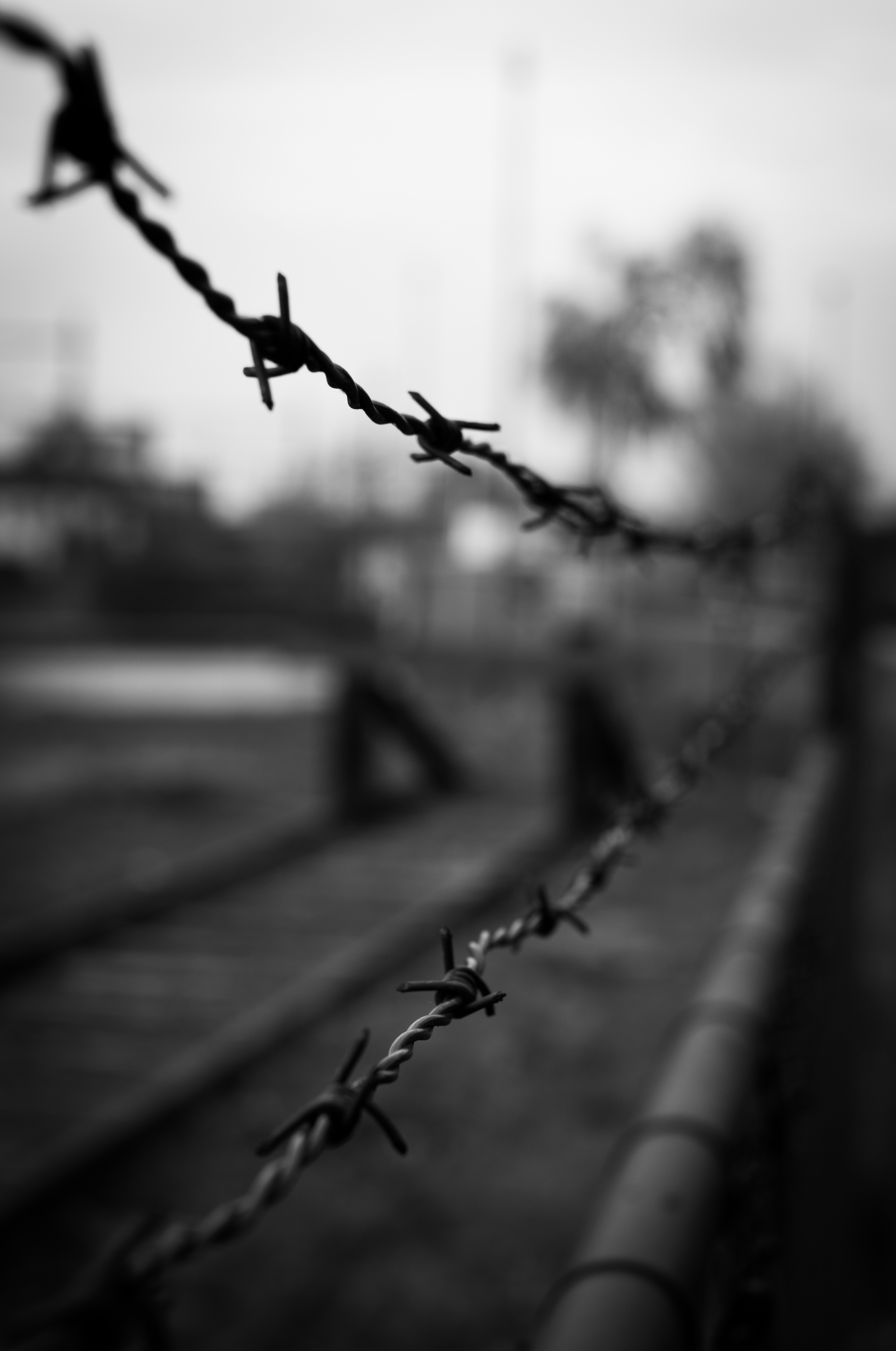 Barbed wire black and white crime fence forbidden · free photo