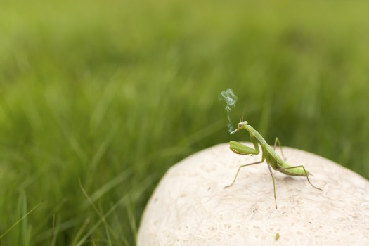 Animal, Funny, Grasshopper, Insect