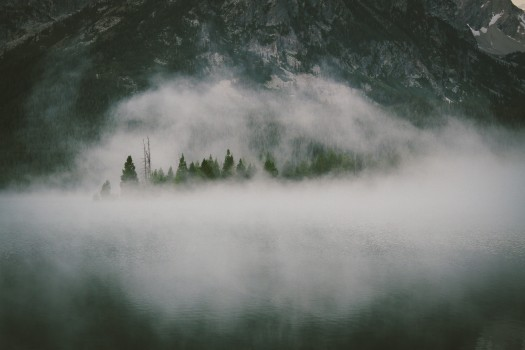 Fog, Forest, Mist, Mountains