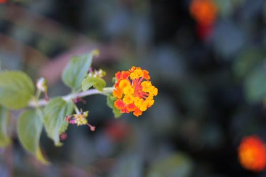 Flower, Nature, Plant, Spring