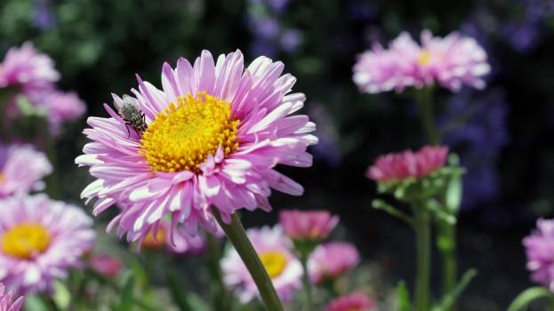 Flowers, Fly, Garden, Nature