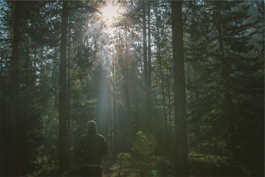 Forest, Jogger, Jogging, Lens Flare