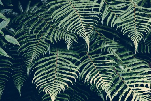 Forest, Nature, Plant, Tropic
