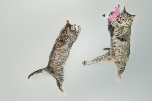 Animals, Cats, Cute, Jumping
