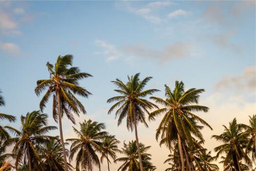 Africa, Beach, Palms, Sky