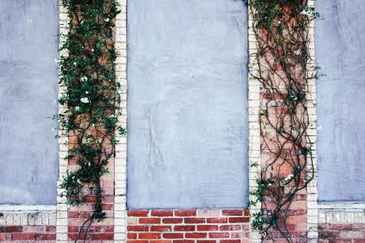 Bricks, Climbing Plant, Wall