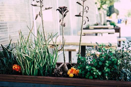 Flowerpot, Plants, Tables