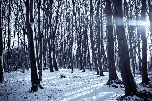 Cold, Forest, Nature, Path