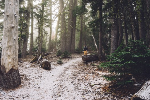 Forest, Hiker, Hiking, Path